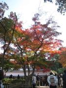 Kamakura_20101128_12