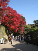 Kamakura_20101128_28_2