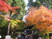 Kamakura_20101128_3_2