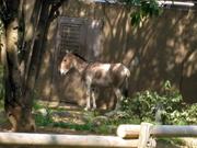Zoorasia_20110429_141706